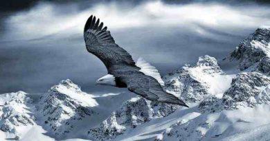 Белый Лунь или Снежный Ястреб а нет... Снегоход Snow Hawk
