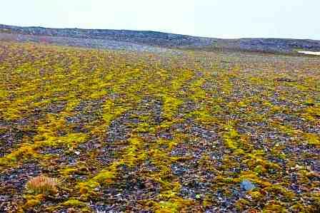 Животный и растительный мир тундры. Доклад по биологии и географии 7 класс