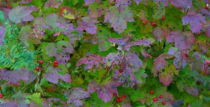 13. И время остановилось... Карелия. Мунозеро. Осень, ягоды.